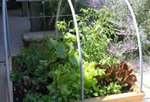 raised bed testimonial photo